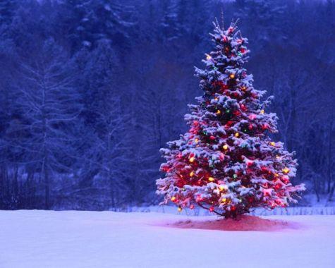 christmas tree małe