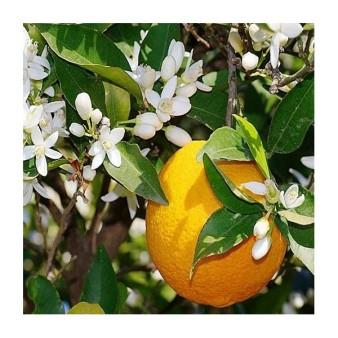 fleurs-d-oranger-ou-neroli