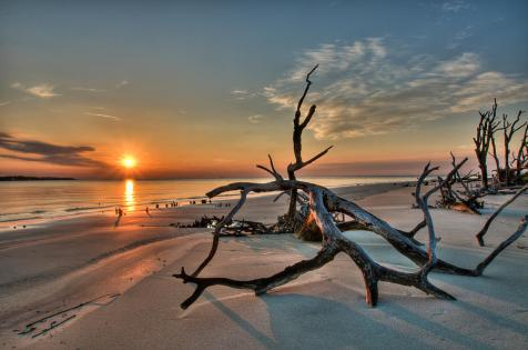 2-driftwood-beach-kudos-photography