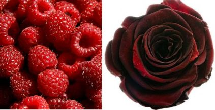 rose_raspberry 2