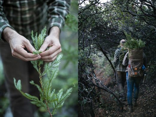 juniper-ridge-procured-design-wilderness