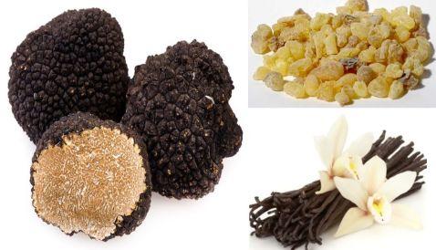 black truffle vanilla olibanum