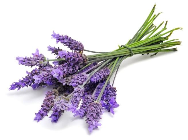 Lavender-1_0